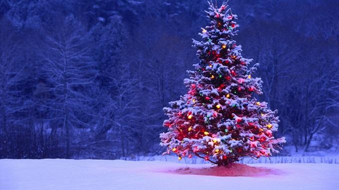 Dekotipps: der perfekte Christbaum