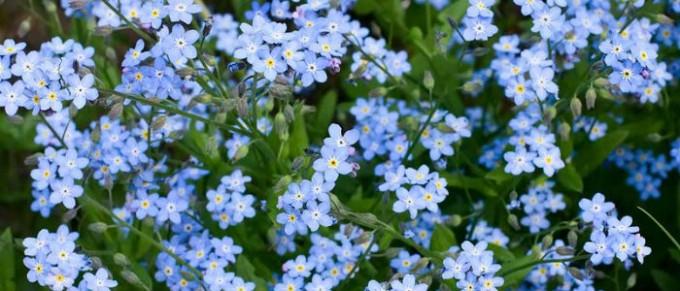 Frühling mit Blumenkästen