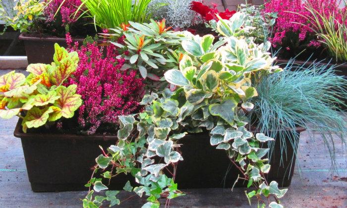 Frühling mit Blumenkästen  Frühling mit Blumenkästen wohnen mit klassikern Fr  hling mit Blumenk  sten bepflanzter Blumenkasten