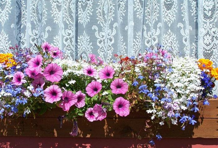 Frühling mit Blumenkästen  Frühling mit Blumenkästen wohnen mit klassikern Fr  hling mit Blumenk  sten bunt bepflantzer blumenkasten