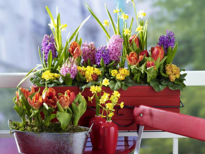 Frühling mit Blumenkästen  Frühling mit Blumenkästen wohnen mit klassikern Fr  hling mit Blumenk  sten kunterbuntbepflanzterbalkonkasten